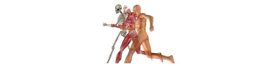 Músculos y huesos